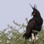 Serengeti-1120571