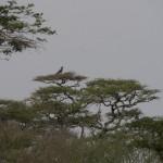 Serengeti-1120576
