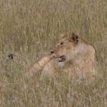 Serengeti-1120578