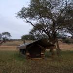 Serengeti-1120622