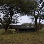 Serengeti-1120623