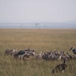 Serengeti-1120636