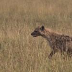 Serengeti-1120637