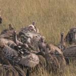Serengeti-1120642