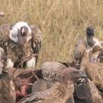 Serengeti-1120657