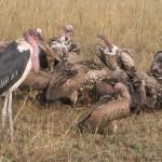 Serengeti-1120659