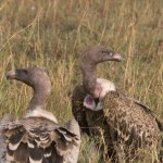 Serengeti-1120666