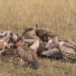 Serengeti-1120667