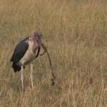Serengeti-1120674
