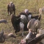 Serengeti-1120687
