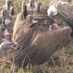 Serengeti-1120699