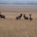 Serengeti-1120707