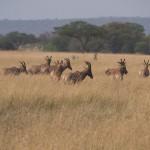 Serengeti-1120711