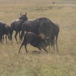 Serengeti-1120713