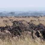 Serengeti-1120733