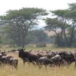 Serengeti-1120747