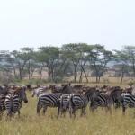 Serengeti-1120749