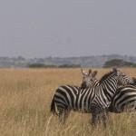 Serengeti-1120752