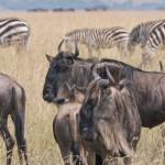 Serengeti-1120757