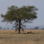 Serengeti-1120767