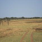 Serengeti-1334