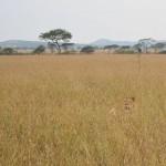 Serengeti-1354