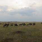 Serengeti-1365