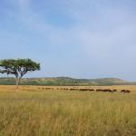 Serengeti-1404