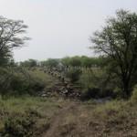 Serengeti-1405
