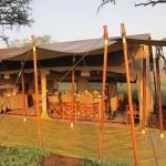 Serengeti-1420